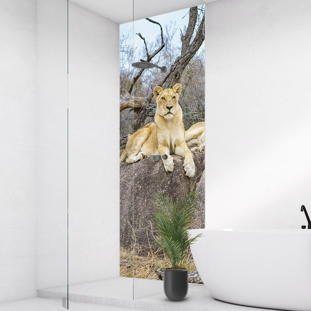 Duschrückwand Löwen Südafrika