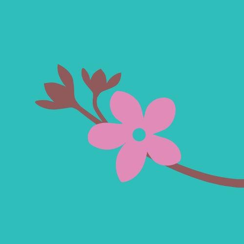 Cheryy Blossom